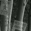 Forest Of Irrelevant Road Signs
